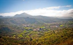 Farmfield su Tenerife Fotografia Stock