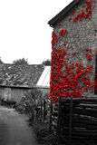 Farmhouse. Main house of a farm with a red plant growing on it, black red Royalty Free Stock Photo