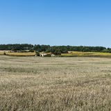 Farmhouse on the arable land. Wilted sunflower fields and poor farmhouse on the arable land after harvesting in France Stock Photography