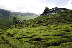 Farmhouse in cameron highlands, tea plantations. The round hills of Cameron Highlands, in Malaysia. Tea plantations Royalty Free Stock Images