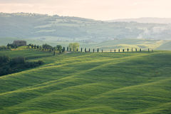 Farmhouse with cypess alley and fields, Tuscany, Italy Royalty Free Stock Photo