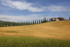 Farmhouse with cypress, Tuscany Stock Photos