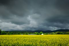 Farmhouse in Fields of Mustard. The sun illuminates fields of mustard flowers as a storm looms over a lone farmhouse in the Irish countryside not far from Stock Images