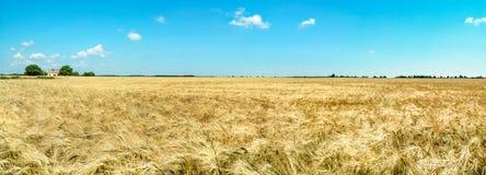 Farmhouse on golden wheat field with sunny blue sky. Germany. Stock Photos