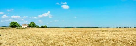 Farmhouse on golden wheat field with sunny blue sky. Germany. Royalty Free Stock Photo