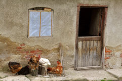 Farmhouse with hens Stock Image