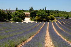 Farmhouse and lavender field in France Royalty Free Stock Photo