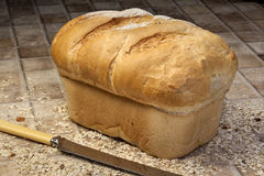 Farmhouse Loaf - Crusty Bread Stock Photography