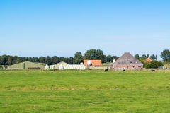 Farmhouse and meadows in polder, North Holland, Netherlands Stock Photo