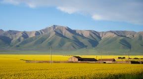 Farmhouse at Qinghai Royalty Free Stock Photography