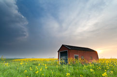 Farmhouse on rapeseed field at sunset Royalty Free Stock Photo