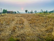 Farmhouse in the rice field with Sunrise In The Morning and blue Royalty Free Stock Photo