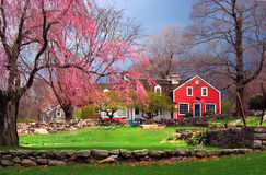 Farmhouse in Spring. View of red farmhouse in spring with pink blossomed tree in foreground stock photography