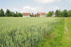 Farmhouse surrounded by wheat field in summer Royalty Free Stock Photography