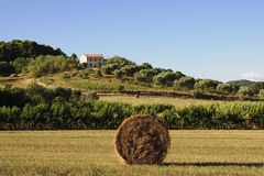 Farmhouse in Tuscany countryside Royalty Free Stock Images
