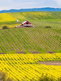 Farmhouse in a vineyard. In Napa, California royalty free stock photos