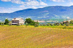 Farmhouse and Vineyard Landscape. Tuscany, Italy stock photography