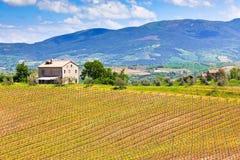 Farmhouse and Vineyard Landscape Stock Photography