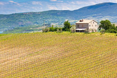 Farmhouse and Vineyard Landscape, Tuscany. Italy. Horizontal shot stock image