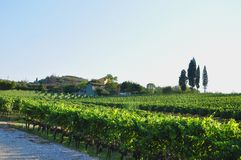 Farmhouse and vineyards chianti countryside Royalty Free Stock Photography