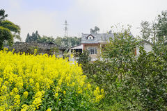 Farmhouses behind flowering rape field in sunny spring Royalty Free Stock Photos
