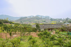 Farmhouses in orchard on sunny spring day Stock Images