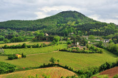 Farmhouses and vineyards of Tuscany Royalty Free Stock Image
