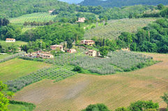Farmhouses and vineyards of Tuscany Stock Images