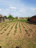 farming стоковая фотография rf