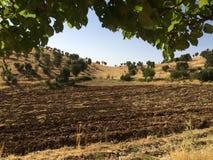 farming стоковая фотография