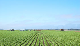 Farming Stock Images