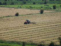 Farming. Farmer and tractor working on farm in england Stock Photo