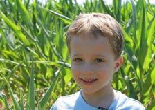 Farming. Portrait of a boy in a corn field Stock Image
