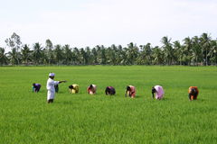 Farming. In india Royalty Free Stock Photography