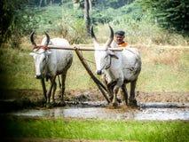 farming royalty-vrije stock afbeelding