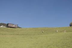 Farming in the alps Stock Image