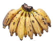 The farming asia banana. The ripe Asia banana on farming Stock Images
