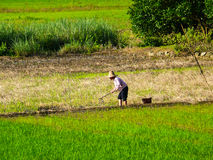 Farming in China Royalty Free Stock Image