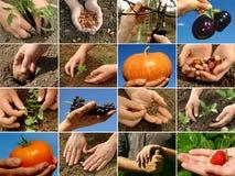 Farming collage royalty free stock photos