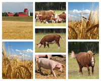 Farming images. Collage of farming and agriculture related photos Stock Photography
