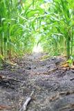 Farming Stock Photos