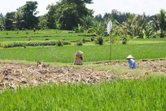 Farming in countryside of Thailand Royalty Free Stock Images