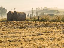Farming crop hay bale rolls early in the morning royalty free stock photos