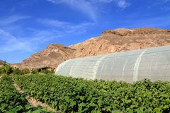 Farming in the Desert Royalty Free Stock Photos