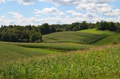 Farming in Drasici, Slovenia. Corn field near the village of Drasici, Metlika, Slovenia Royalty Free Stock Photos