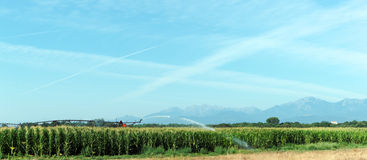 Farming in Eastern plain of Corsica Royalty Free Stock Image