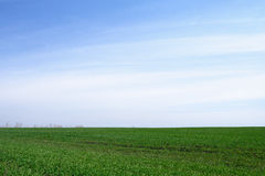 Farming, field planted with green shoots Royalty Free Stock Photography