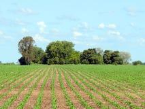 Farming fields Stock Image