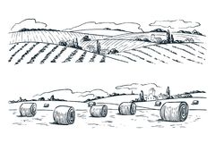 Farming fields landscape, vector sketch illustration. Agriculture and harvesting vintage background. Rural nature view.  stock illustration