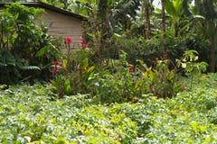 Green field near mount meru. Farming fields near arusha in tanzania on the slopes of mount meru Royalty Free Stock Photos